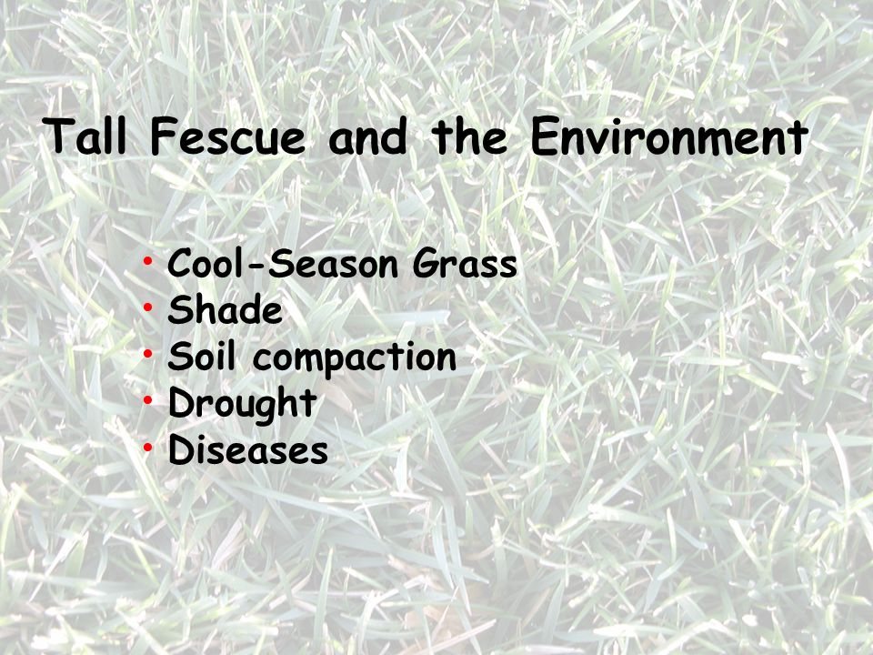 Tall Fescue and the Environment