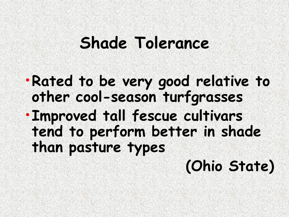 Shade Tolerance Rated to be very good relative to other cool-season turfgrasses.