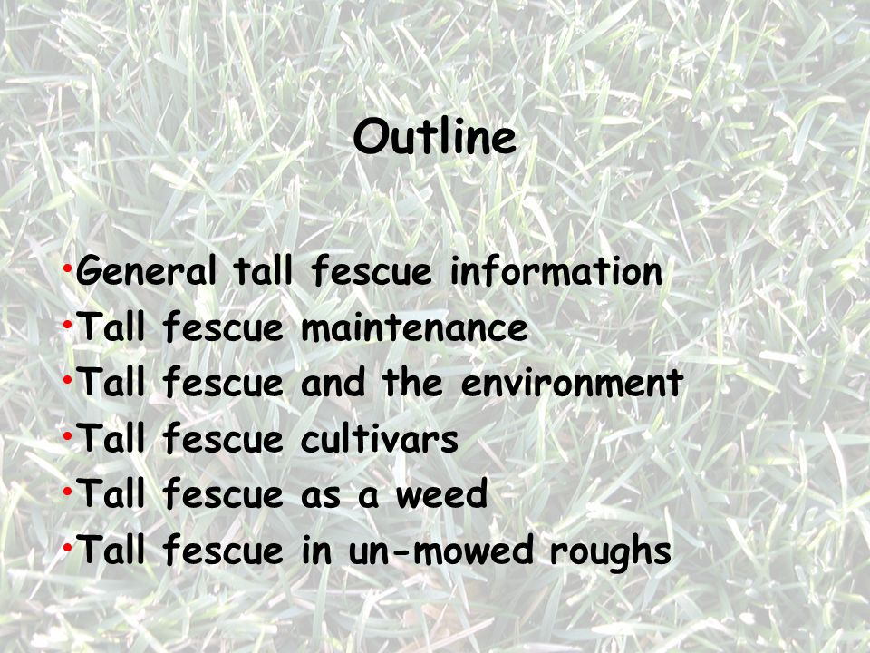Outline General tall fescue information Tall fescue maintenance