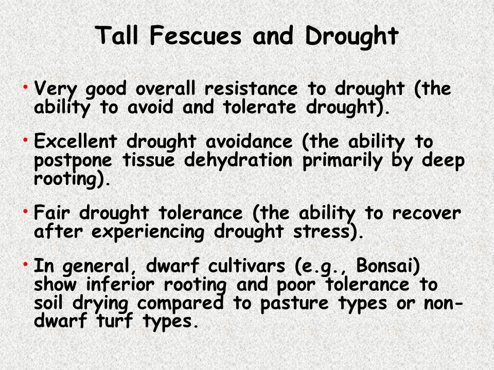 Tall Fescues and Drought
