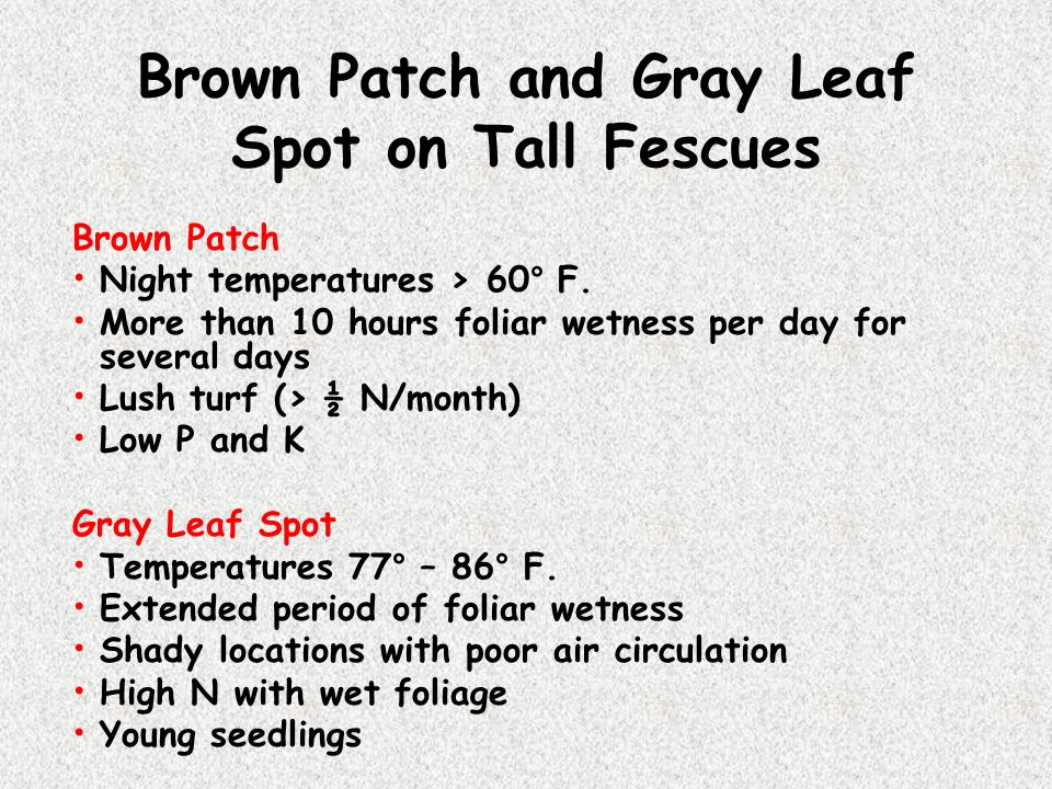 Brown Patch and Gray Leaf Spot on Tall Fescues