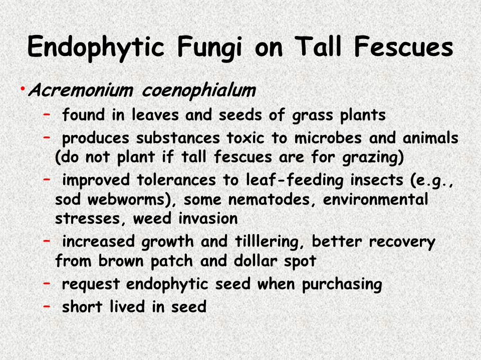 Endophytic Fungi on Tall Fescues