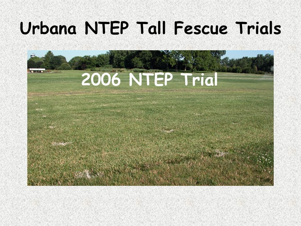 Urbana NTEP Tall Fescue Trials