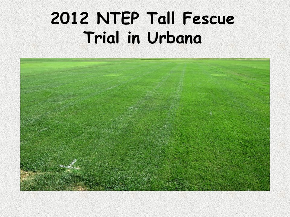 2012 NTEP Tall Fescue Trial in Urbana