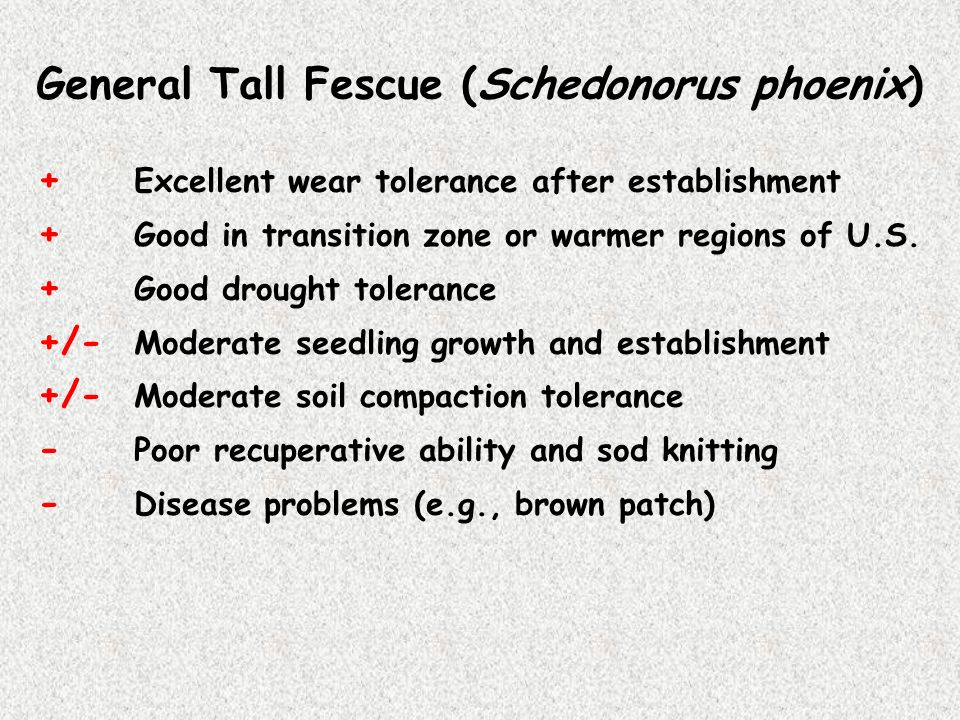 General Tall Fescue (Schedonorus phoenix)