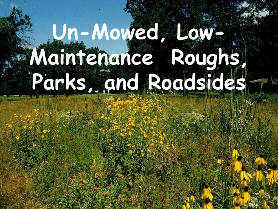 Un-Mowed, Low-Maintenance Roughs, Parks, and Roadsides