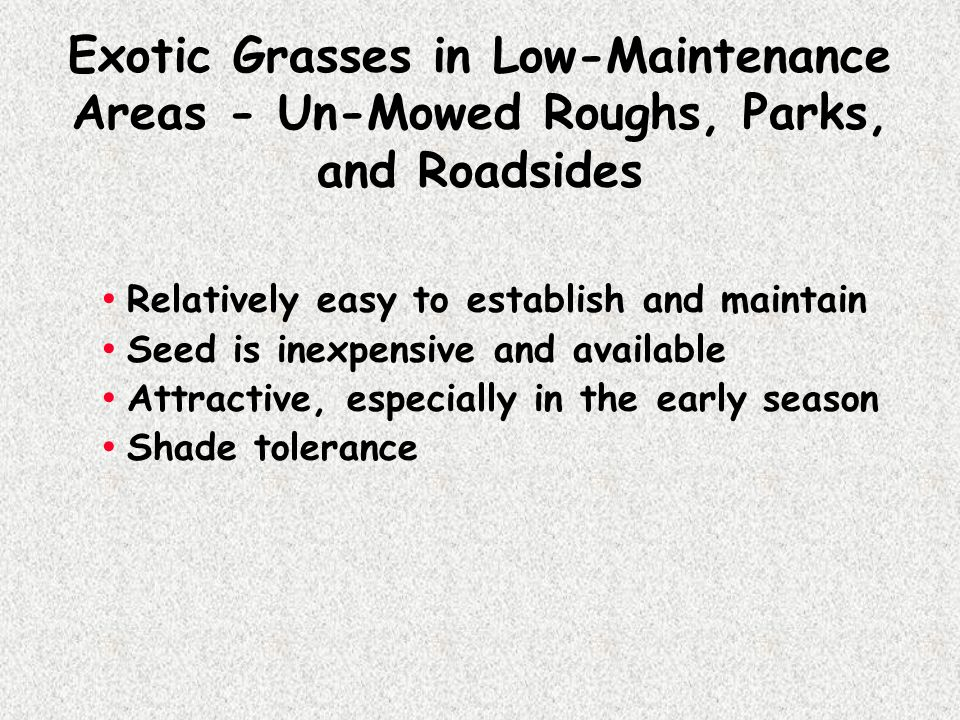 Exotic Grasses in Low-Maintenance Areas - Un-Mowed Roughs, Parks, and Roadsides