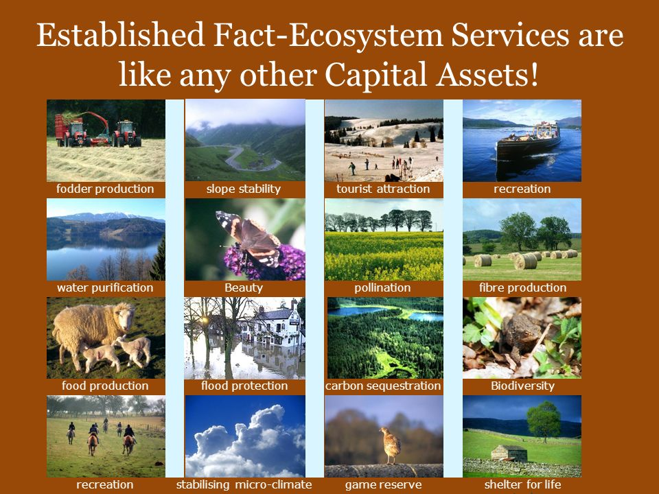 Established Fact-Ecosystem Services are like any other Capital Assets!
