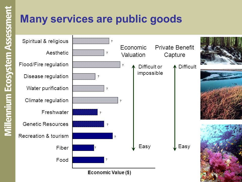 Many services are public goods