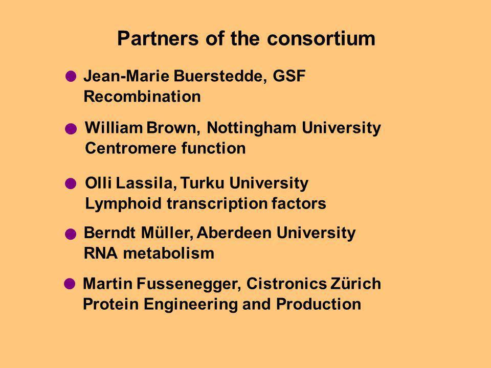 Partners of the consortium