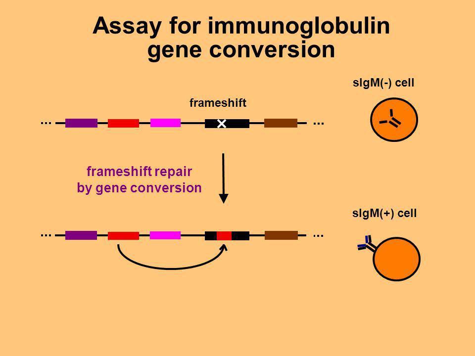Assay for immunoglobulin gene conversion