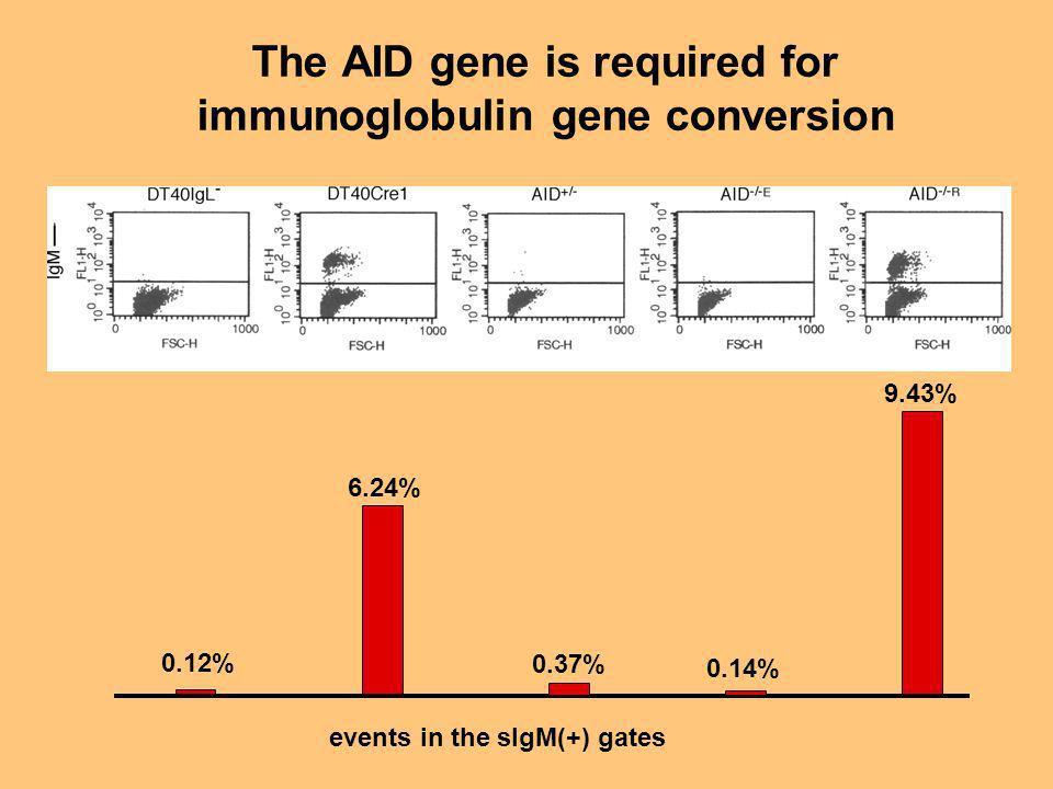 The AID gene is required for immunoglobulin gene conversion