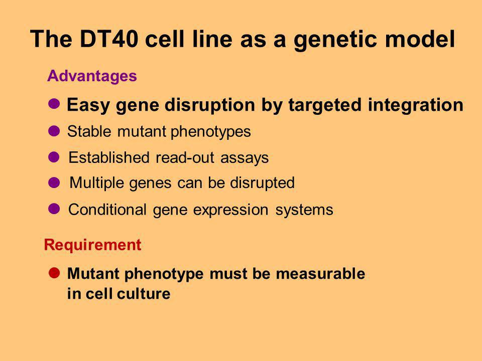 The DT40 cell line as a genetic model