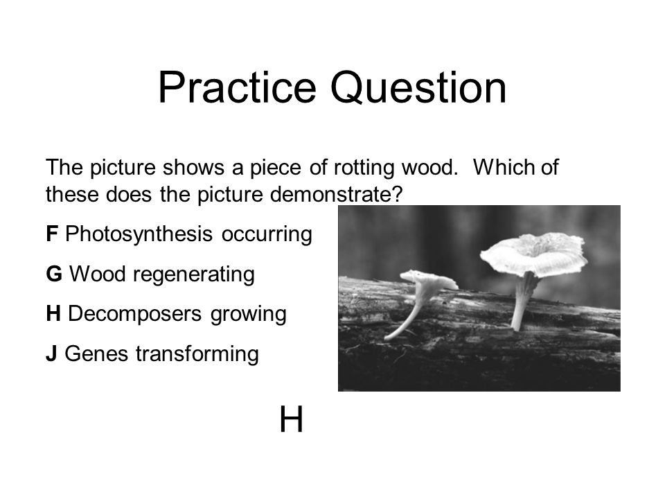 Practice Question The picture shows a piece of rotting wood. Which of these does the picture demonstrate