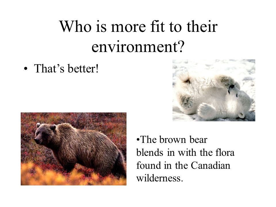Who is more fit to their environment