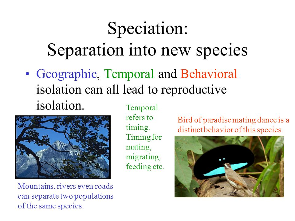 Speciation: Separation into new species