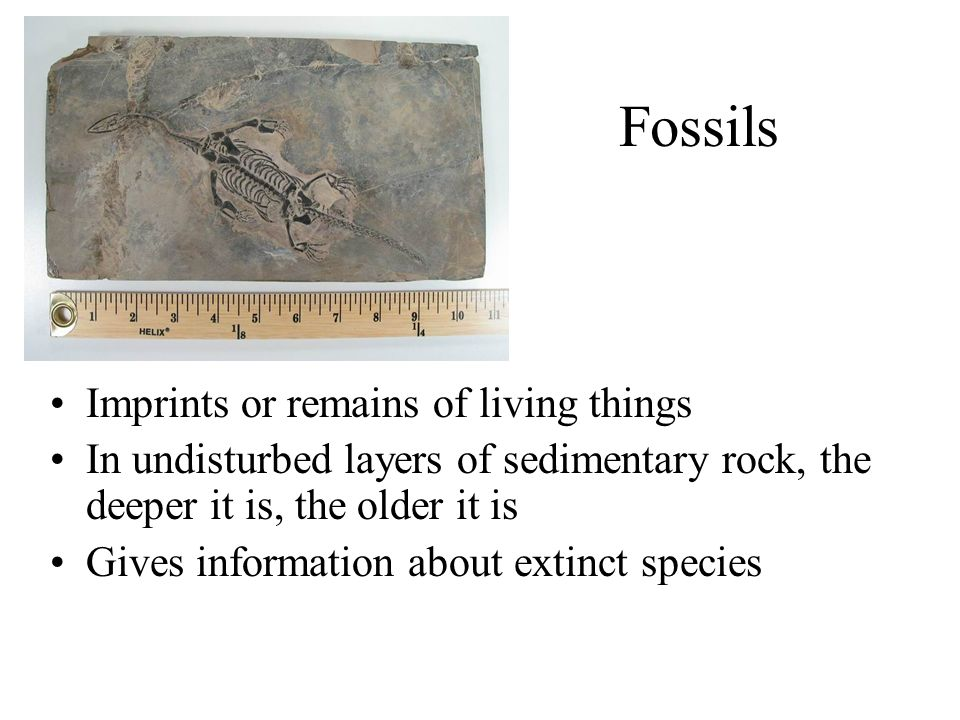 Fossils Imprints or remains of living things