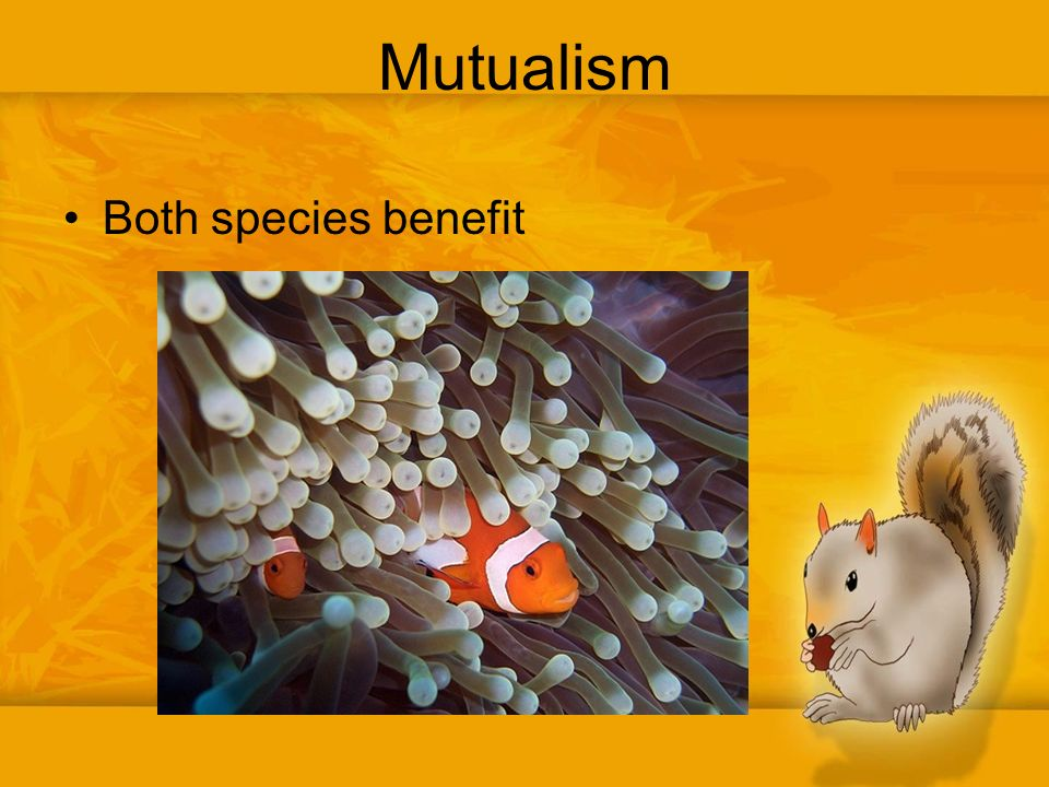 how and why might some species benefit from human intervention Or animal species by human intervention to make sure those traits which are   be developed by intentional breeding from species that had certain desirable.