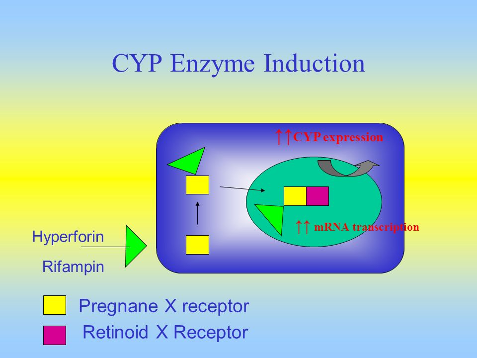 CYP Enzyme Induction ↑↑CYP expression Pregnane X receptor