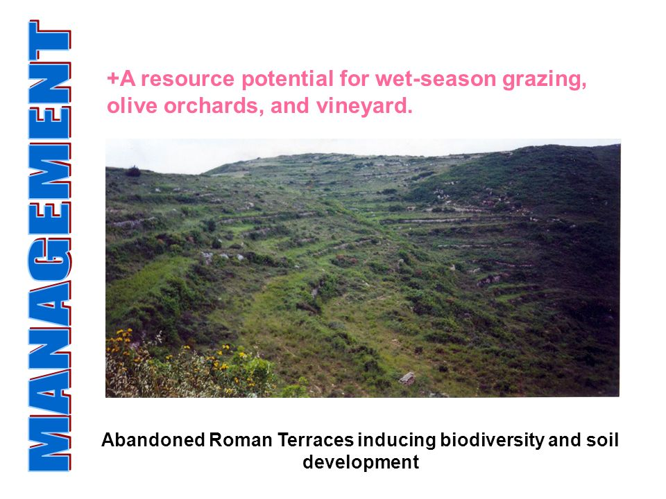 Abandoned Roman Terraces inducing biodiversity and soil development