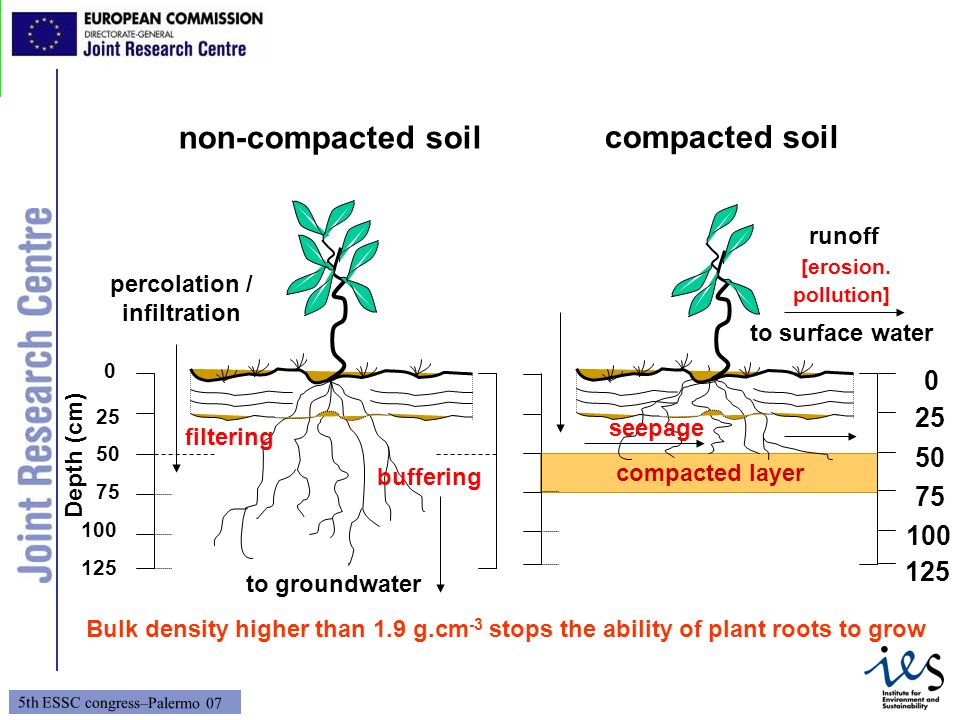 non-compacted soil compacted soil 25 50 75 100 125 runoff