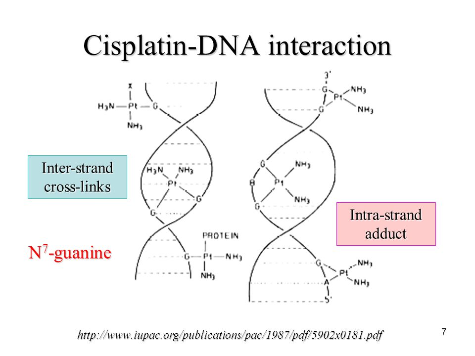 Cisplatin Mechanism Of Action | www.pixshark.com - Images