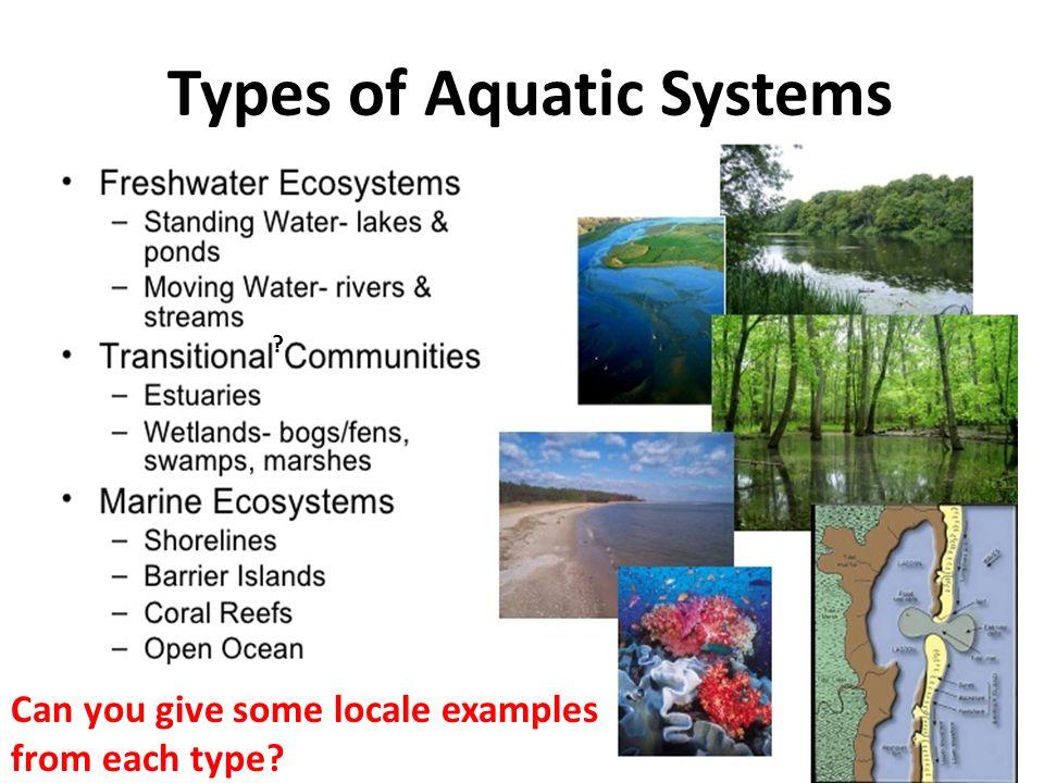 100 worksheets on aquatic ecosytems aquatic climate water and aquatic ecosystems. Black Bedroom Furniture Sets. Home Design Ideas