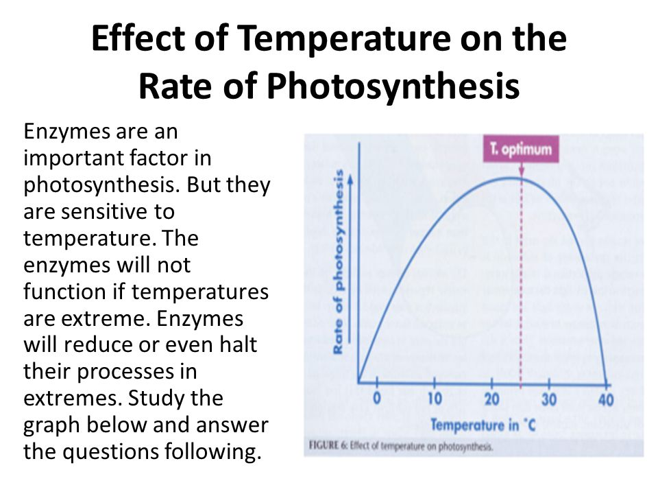which factors affect the rate of photosynthesis and how