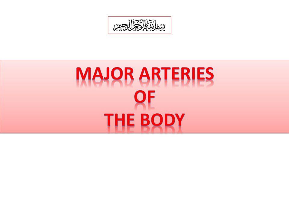 Major arteries of the body