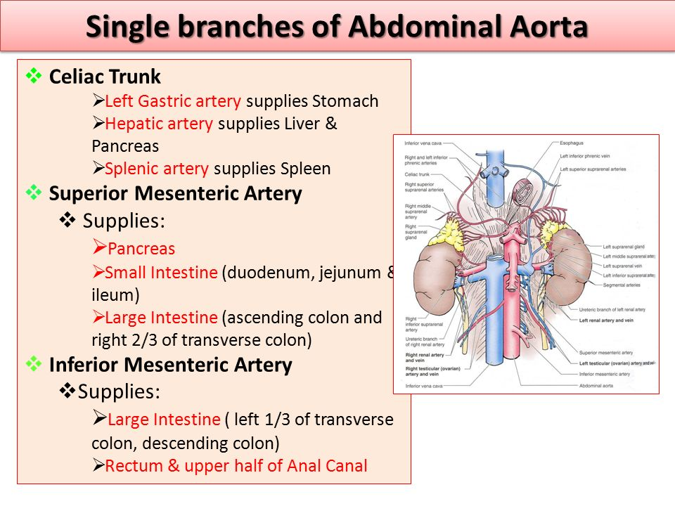 Single branches of Abdominal Aorta