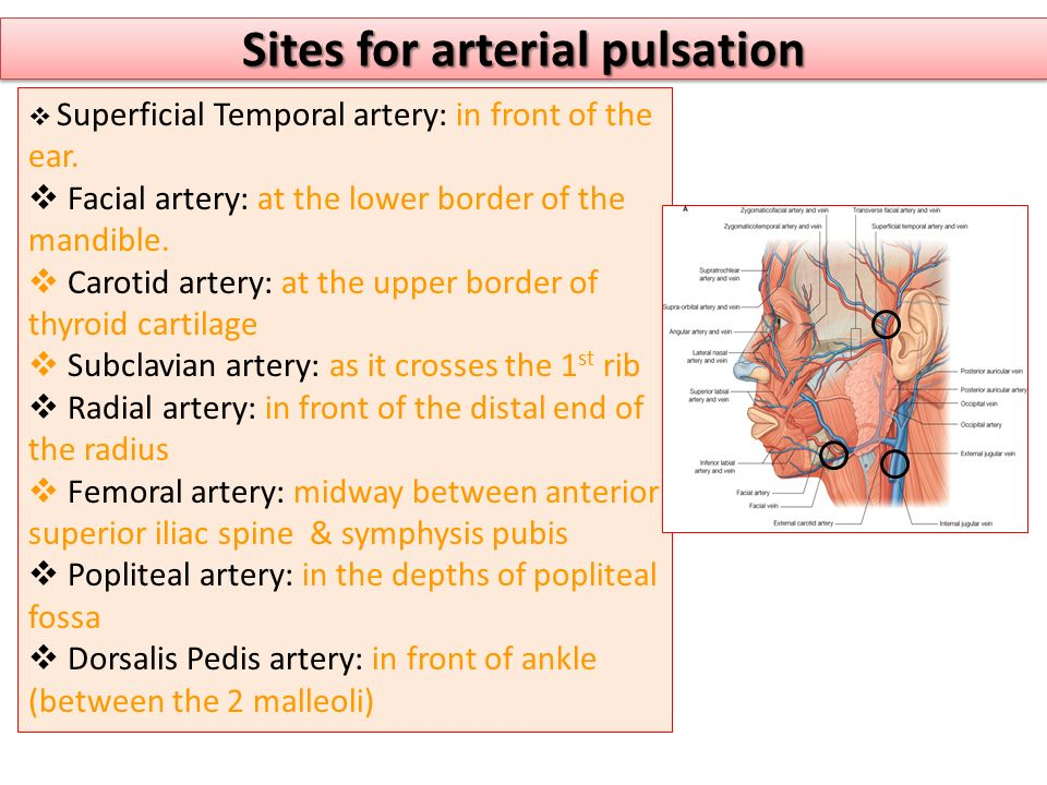 Sites for arterial pulsation