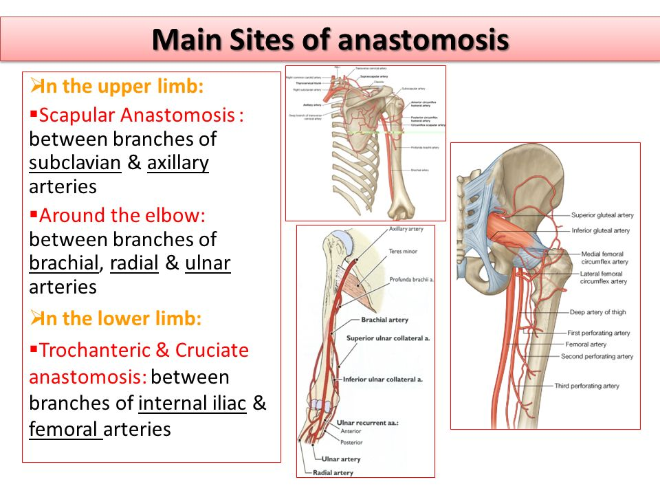 Main Sites of anastomosis