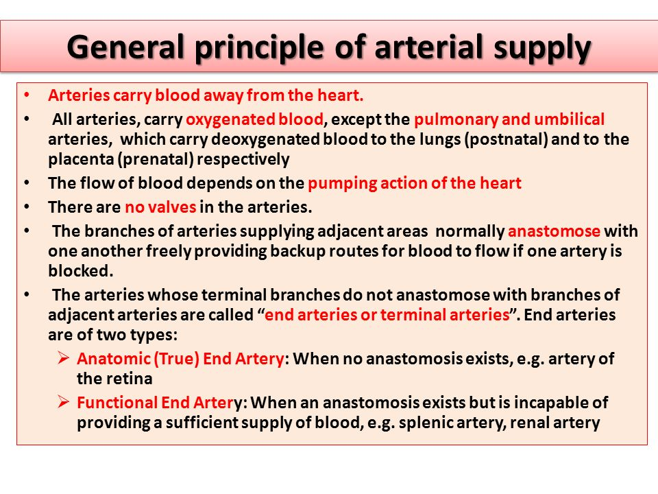 General principle of arterial supply