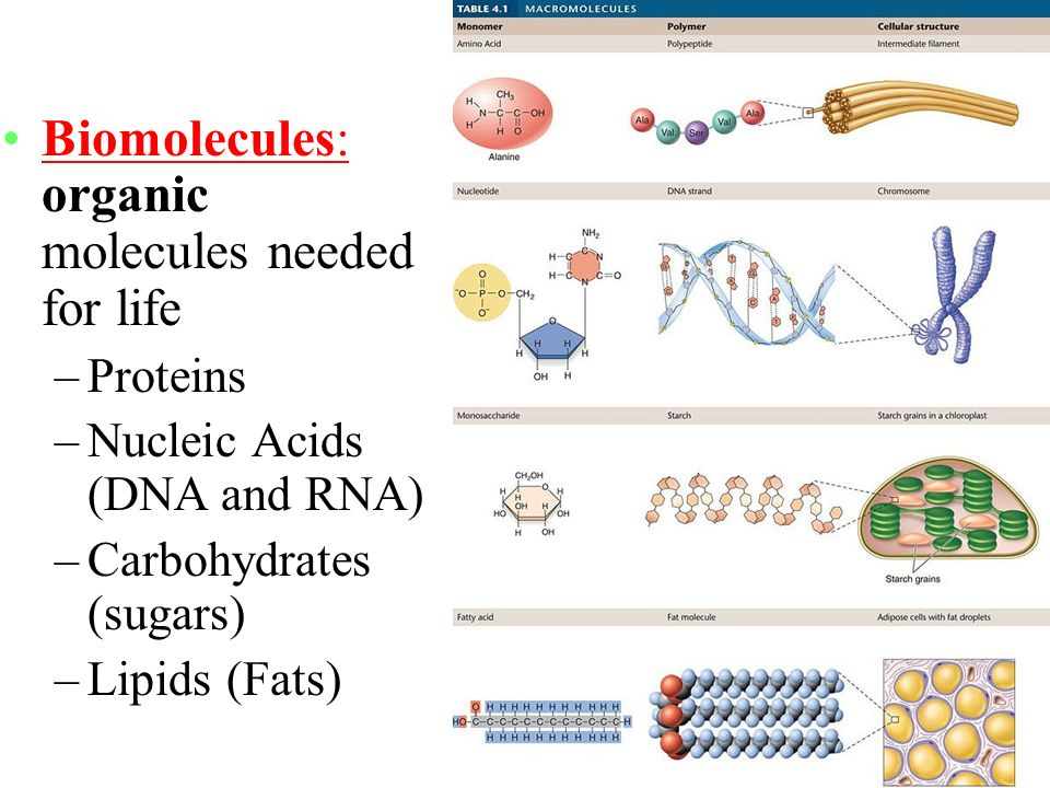 bio molecules 11 biology biomolecules biomolecules: all the carbon compounds which are obtained from living tissues are called biomolecules analysis of chemical composition: for this, a living tissue is taken the tissue is ground in trichloroacetic acid (cl 3 ccooh) by using pestle and mortar the slurry is then filtered through a cloth.