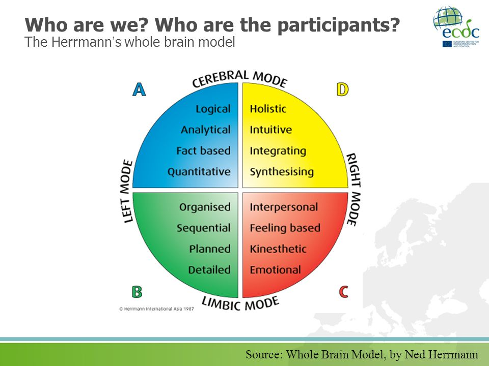 Who are we Who are the participants The Herrmann's whole brain model