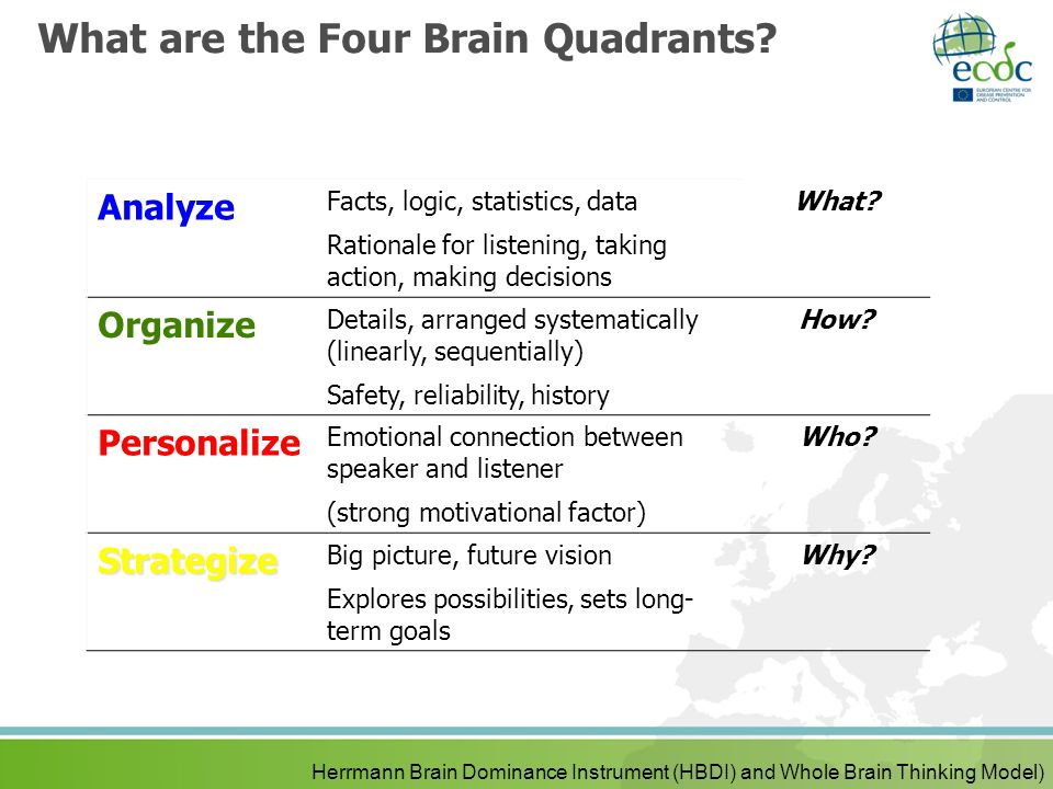 What are the Four Brain Quadrants