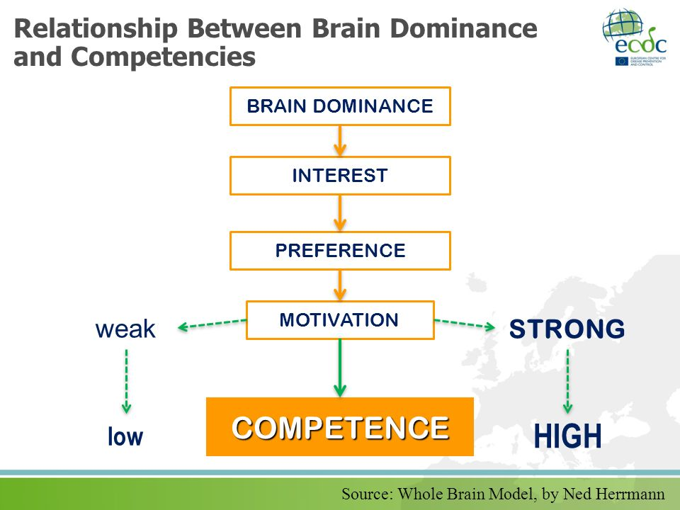 Relationship Between Brain Dominance and Competencies