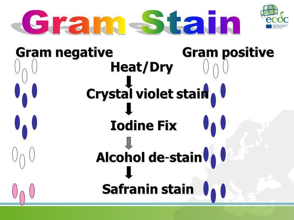 Gram Stain Gram negative Gram positive Heat/Dry Crystal violet stain