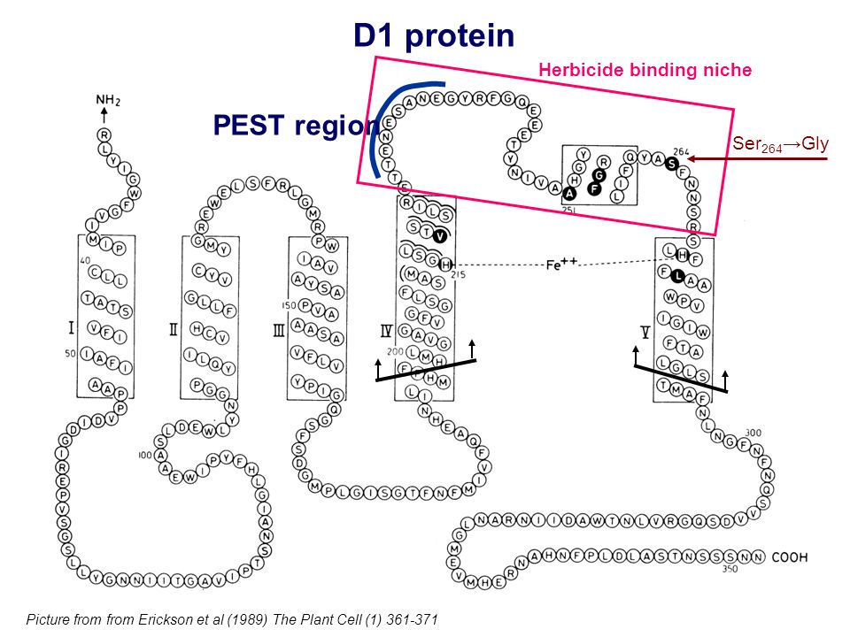 Herbicide binding niche
