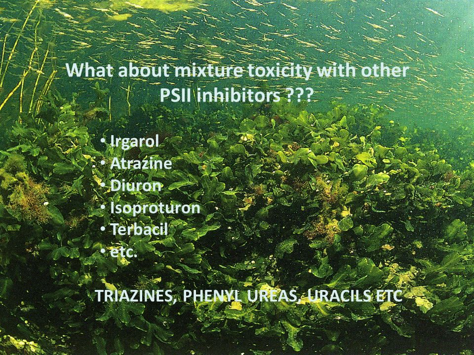 What about mixture toxicity with other PSII inhibitors
