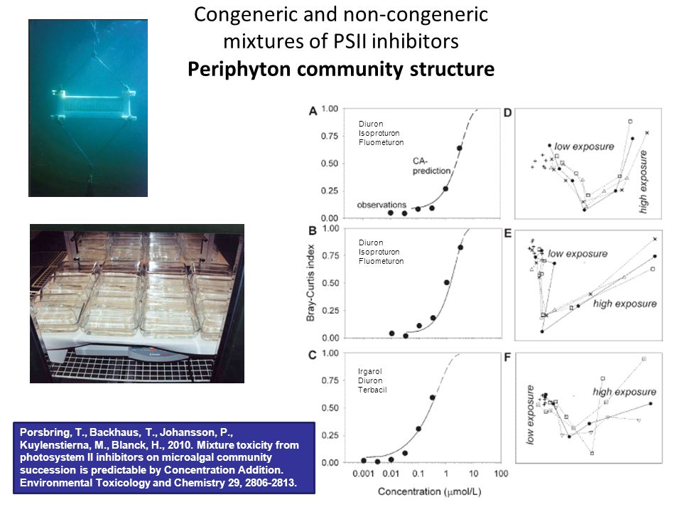 Congeneric and non-congeneric mixtures of PSII inhibitors Periphyton community structure