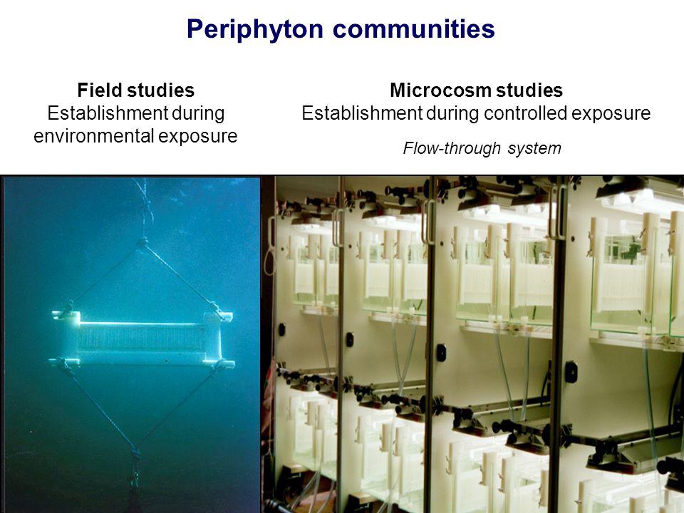 Periphyton communities
