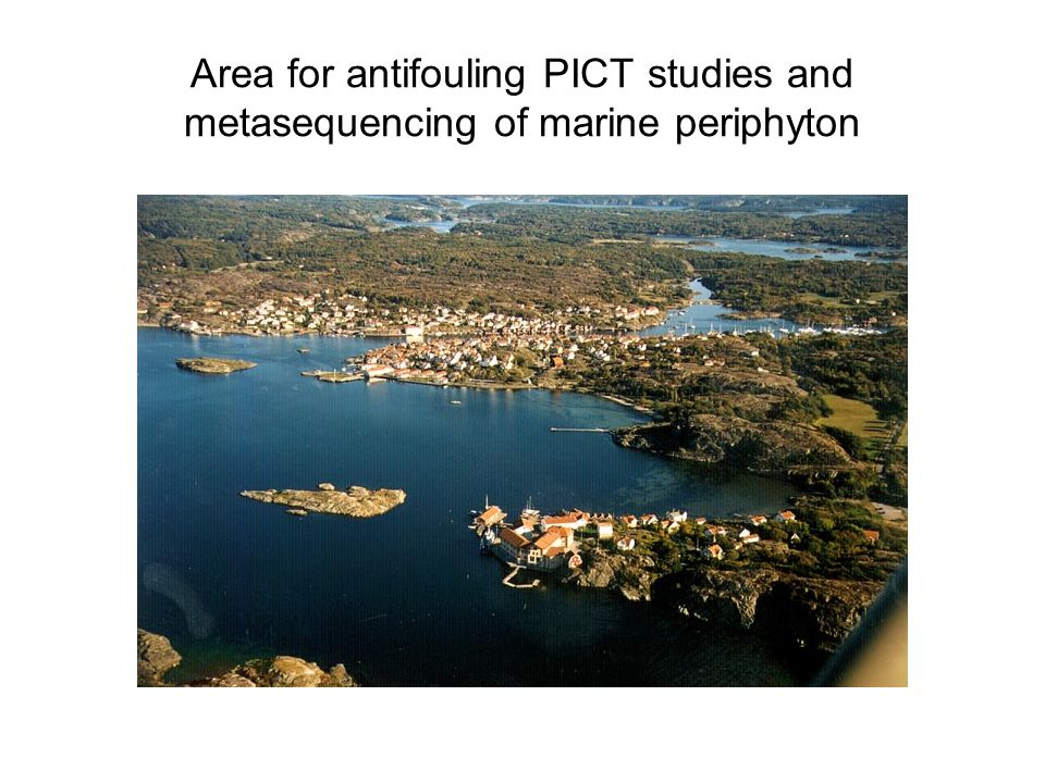 Area for antifouling PICT studies and metasequencing of marine periphyton