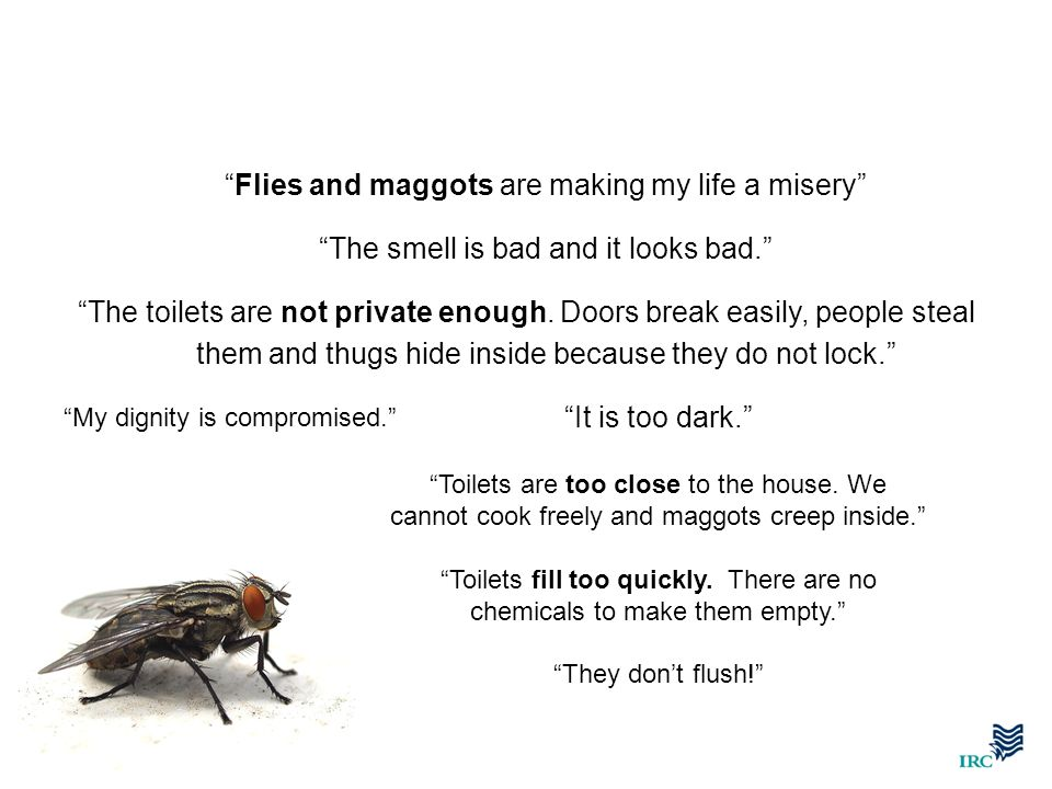 Flies and maggots are making my life a misery