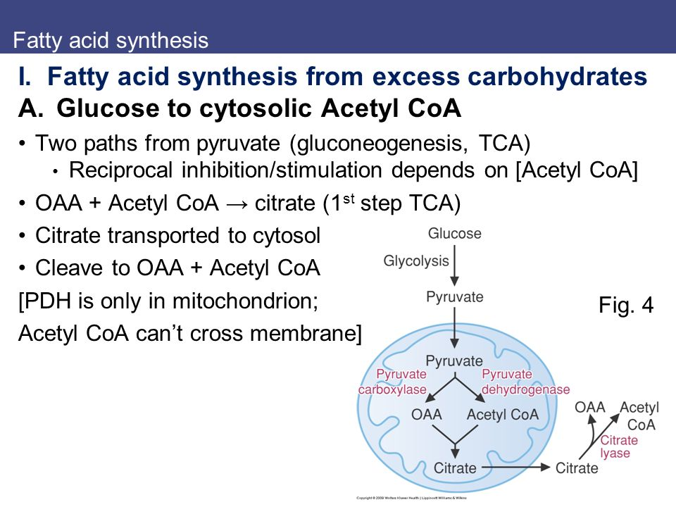 fatty acid sysnthesis Sigma-aldrich presents an article about how proliferatively active cells require fatty acids for functions such as membrane generation, protein modification, and bioenergetic requirements.