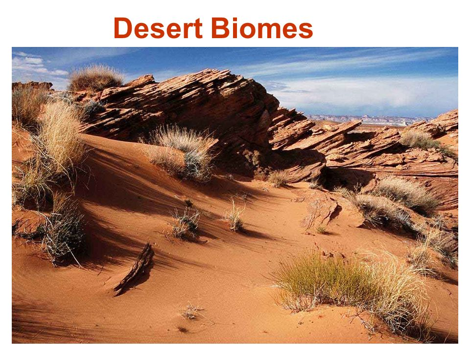 Biomes Are A Group Of Ecosystems With Similar Abiotic And