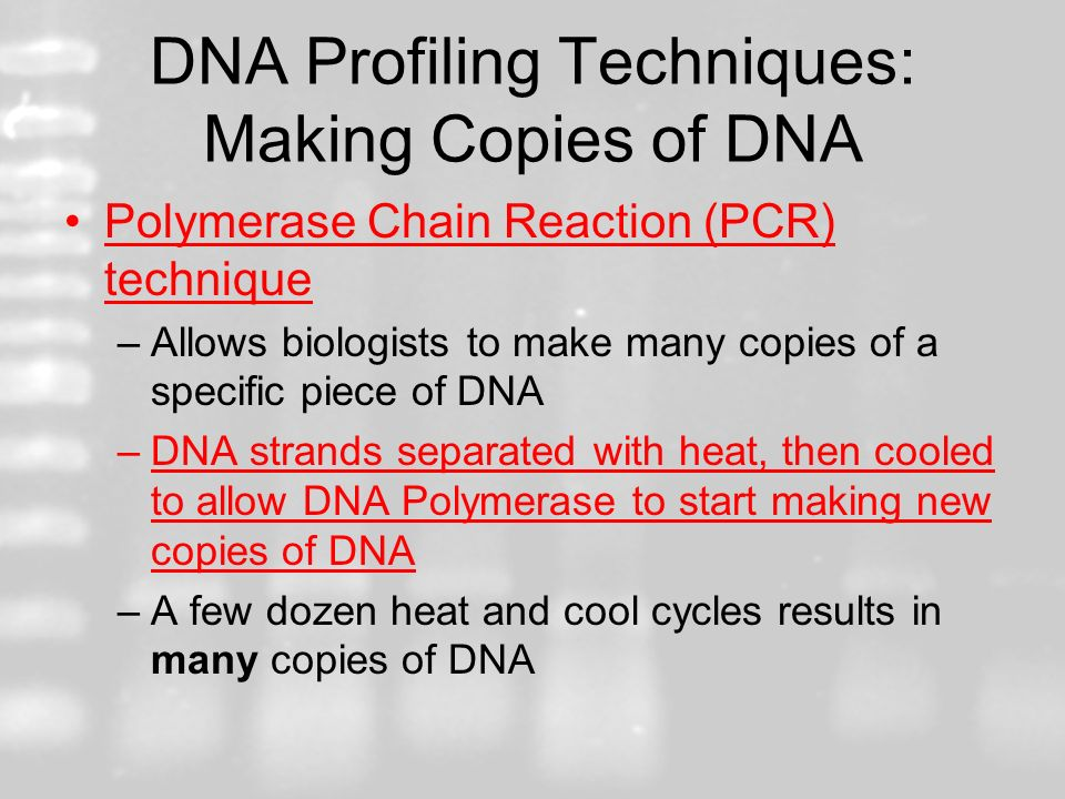 DNA Profiling Techniques: Making Copies of DNA