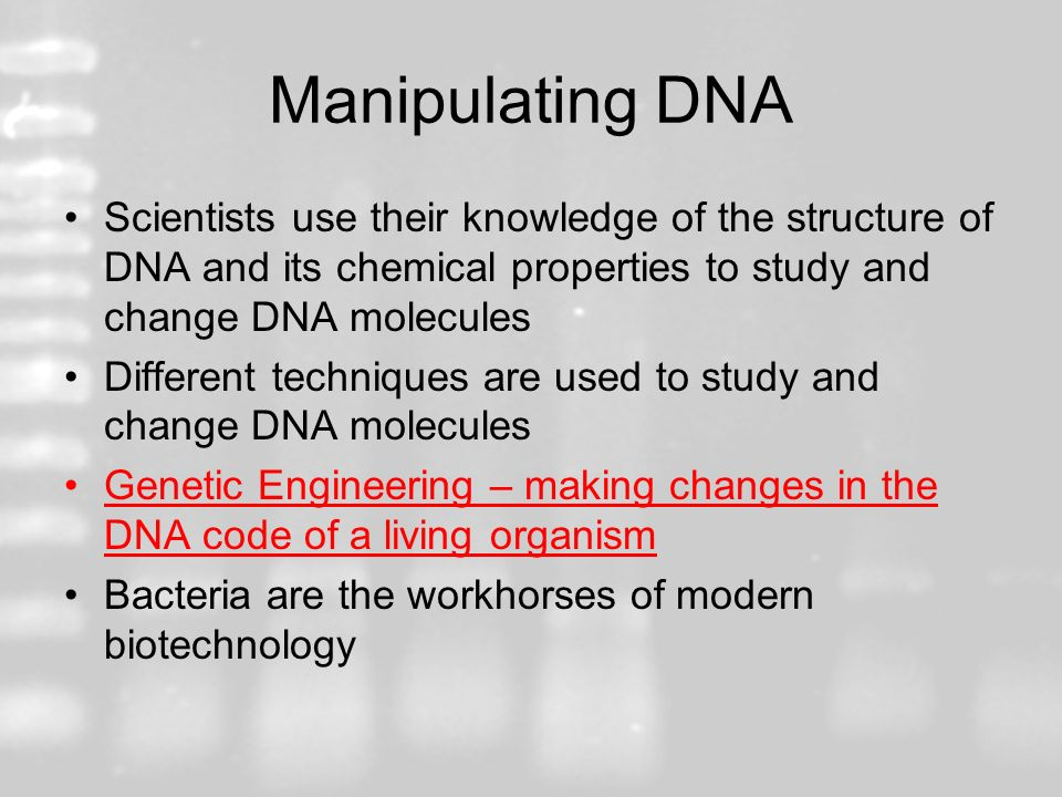 Manipulating DNA Scientists use their knowledge of the structure of DNA and its chemical properties to study and change DNA molecules.