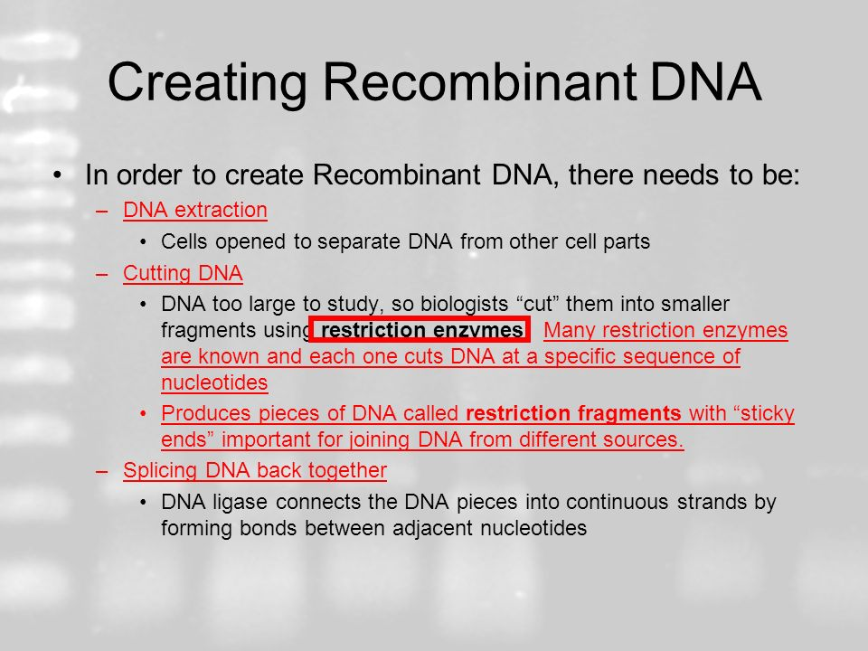 Creating Recombinant DNA