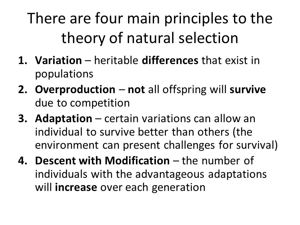 Natural Selection Variation Competition